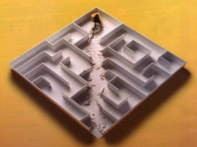 Rat in Maze